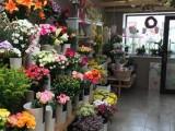 Přenechám pronájem Květinářství
