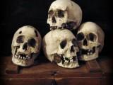 Lidská lebka (human skull replica)