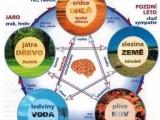 Řízená detoxikace metodou MUDr. Jonáše