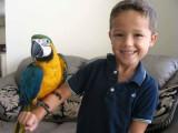 Prodám Vánoce Ara Ararauna papoušci