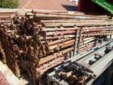 Koupim haki leseni i jiny tip leseni.