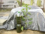 hnojivo