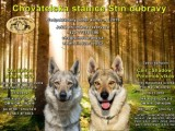 Rezervace štěňat československého vlčáka