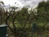 Prořez ovocných stromů,údržba zahrad,pozemků a firemních areálů