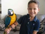 Nabídka Ara Ararauna papoušci