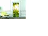 Fototapeta na dveře - Prosvětlený les, nové
