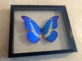 Tropičtí motýli v rámečku.